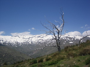 bare tree mountain above capi 300x225 A WEEKS WONDERING IN FERREIROLA
